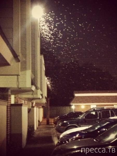 Тысячи термитов обрушились на Новый Орлеан (29 фото)