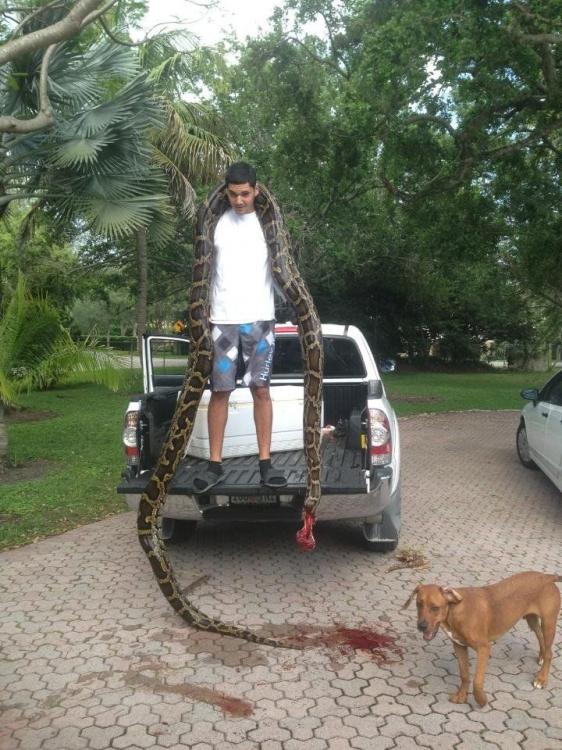 Охотник на змей - Джейсон Леон, собственноручно обезглавил огромного питона (2 фото)