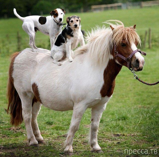 Заряд позитива - забавные животные, часть 35 (47 фото)