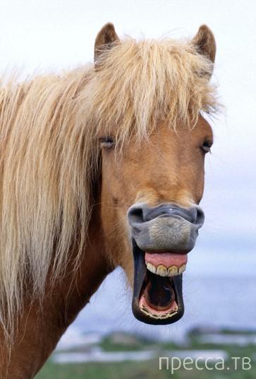 Животные тоже улыбаются (13 фото)