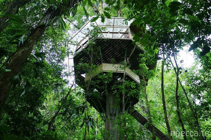 Finca Bellavista - необычная коммуна на деревьях (14 фото)