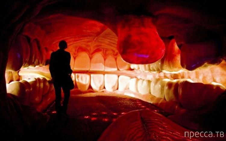 Топ 6: Самые шокирующие анатомические музеи мира ... (12 фото)