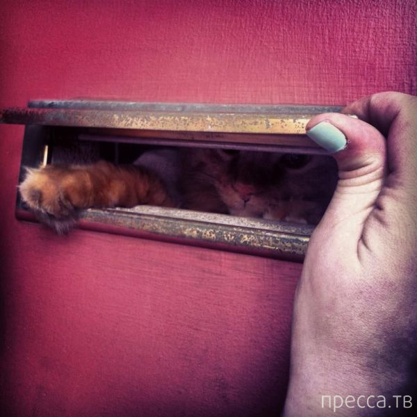 Заряд позитива - забавные животные, часть 45 (53 фото)