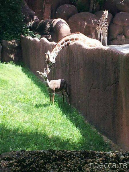 Заряд позитива - забавные животные, часть 47 (41 фото)
