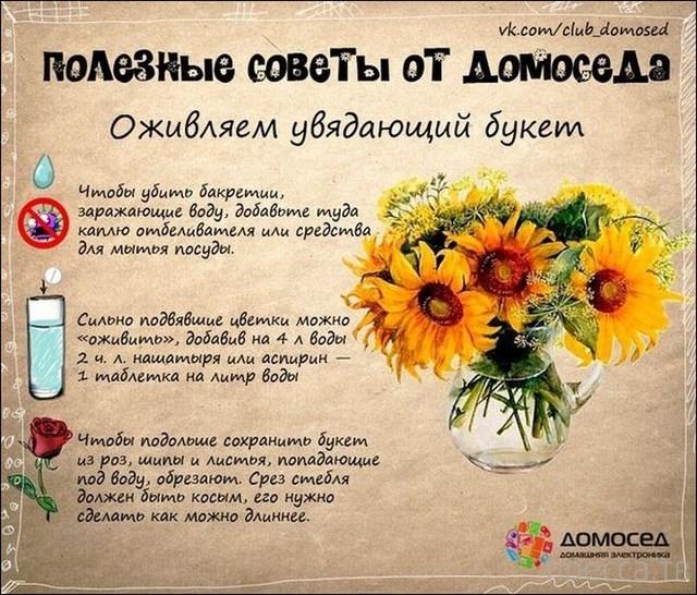 Полезные советы от домоседа (19 фото)