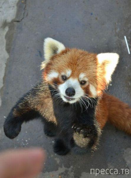 Эти забавные животные (44 фото)