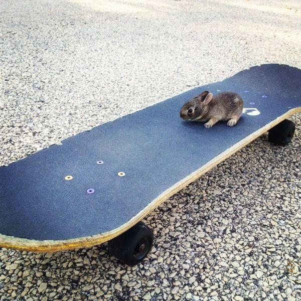 Милые и забавные животные, часть 5 (41 фото)
