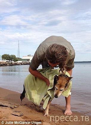 Умерла собака, фото которой тронуло весь мир (12 фото)