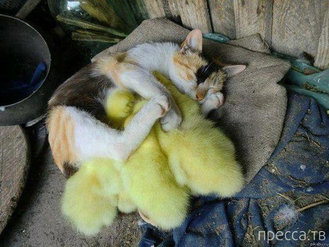 Милые и забавные животные, часть 12 (42 фото)