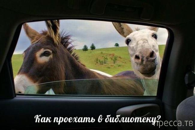 Приколы с животными... (17 фото)