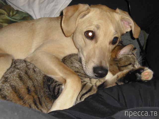Милые и забавные животные, часть 13 (39 фото)