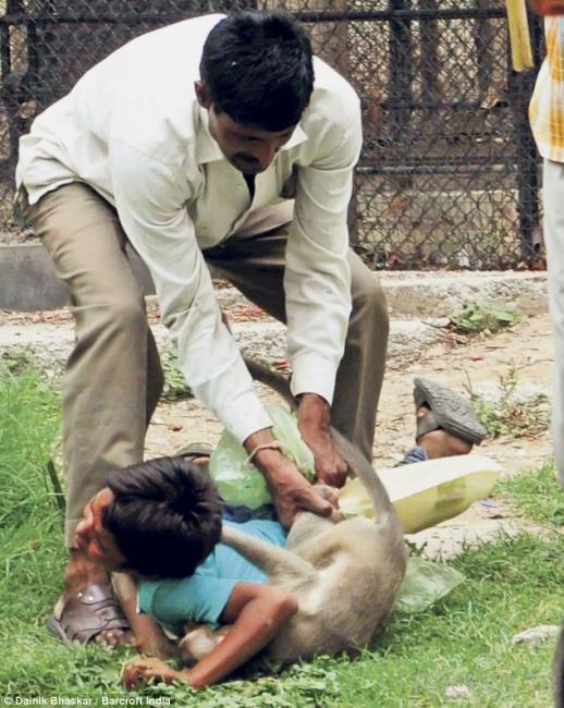 В Индии агрессивная обезьяна напала на маленького мальчика во время поездки в зоопарк (5 фото)