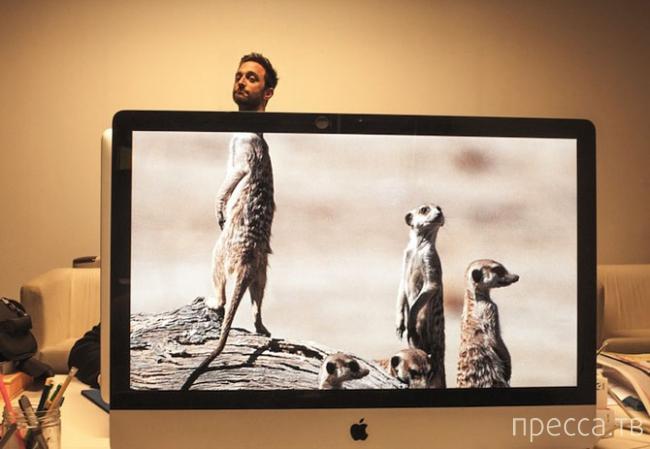 Desk Safari - Новое развлечение офисных работников (14 фото)