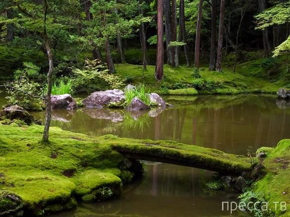 Сад камней для медитации (23 фото)