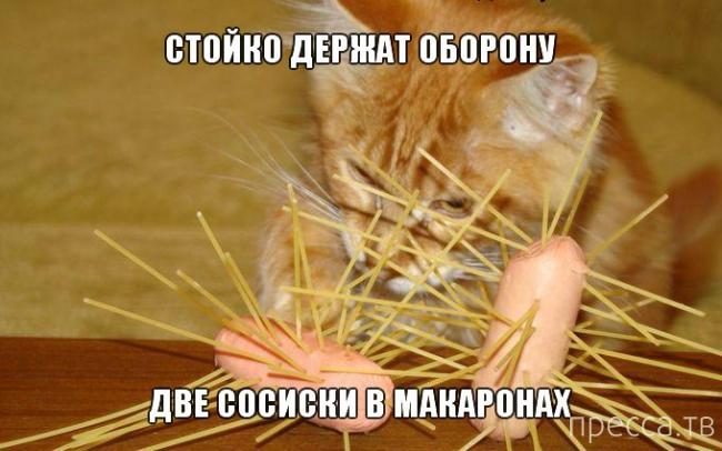 Приколы с животными, часть 2 (18 фото)