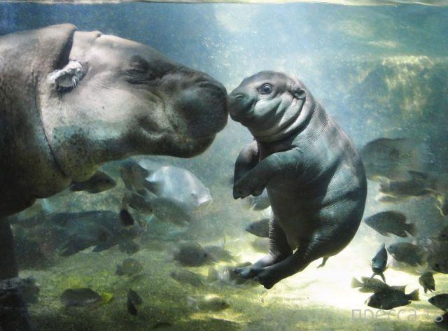 Милые и забавные животные, часть 18 (45 фото)