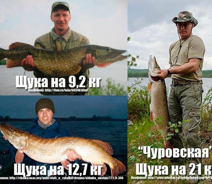 """""""Чуровская"""" щука Путина ... (11 фото + видео)"""