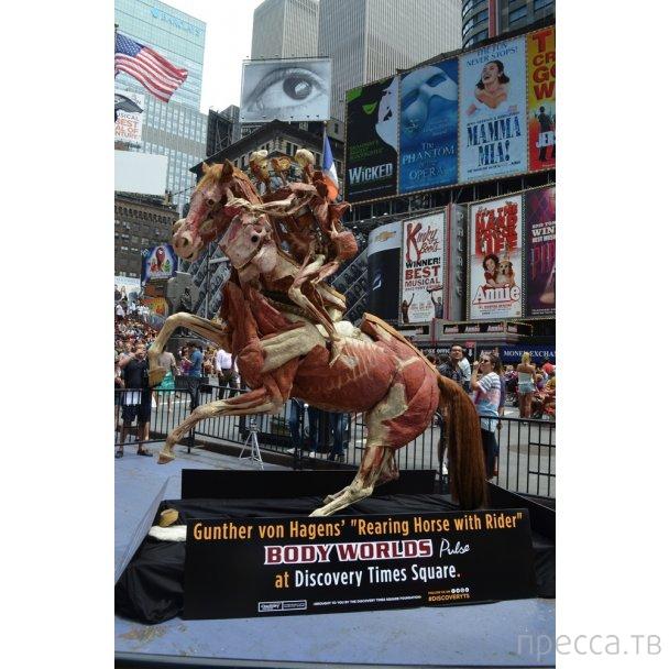 Патологоанатом из Германии Гюнтер фон Хагенс (Доктор Смерть) открыл в Нью-Йорке музей с трупами (8 фото)