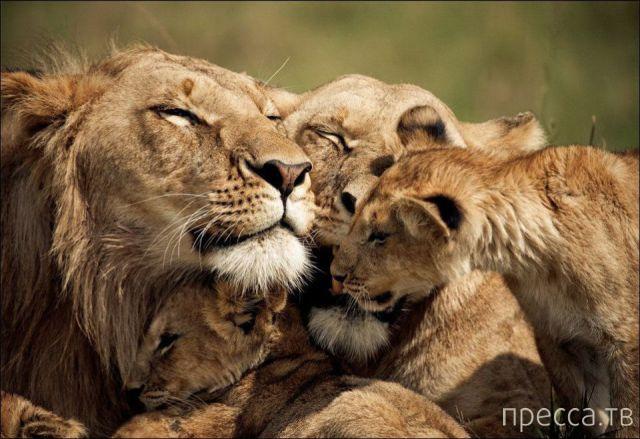 Милые и забавные животные, часть 21 (43 фото)