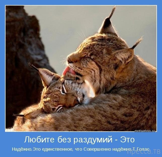 Позитивные мотиваторы для хорошего настроения (14 фото)