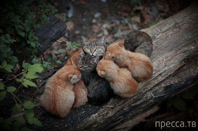Милые и забавные животные, часть 25 (41 фото)
