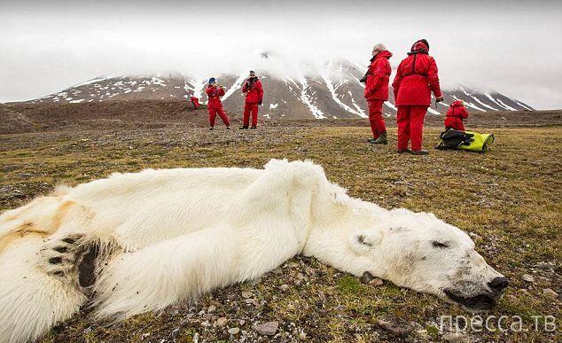 О глобальном потеплении (4 фото)