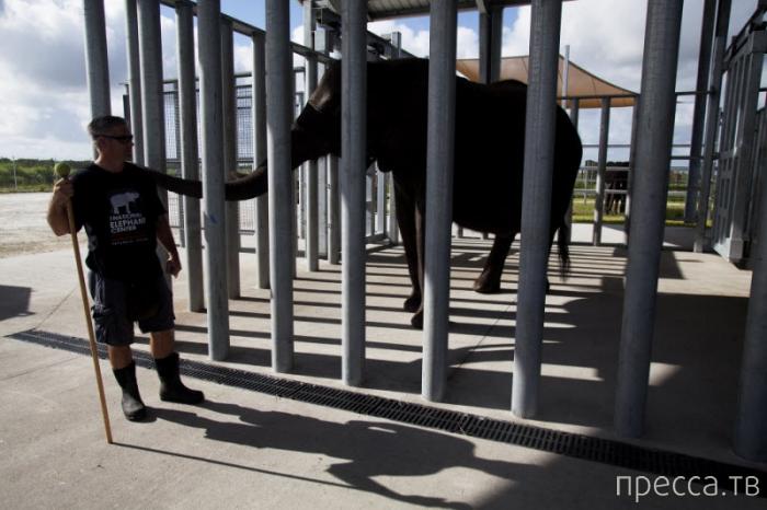 Фоторепортаж о Национальном центре слонов во Флориде (15 фото)