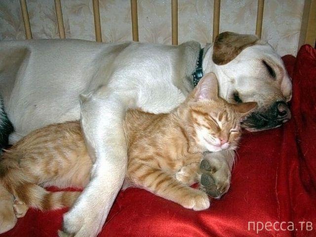 Милые и забавные животные, часть 28 (38 фото)