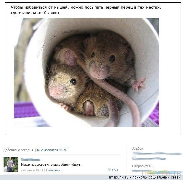 Прикольные комментарии из социальных сетей, часть 5 (22 фото)