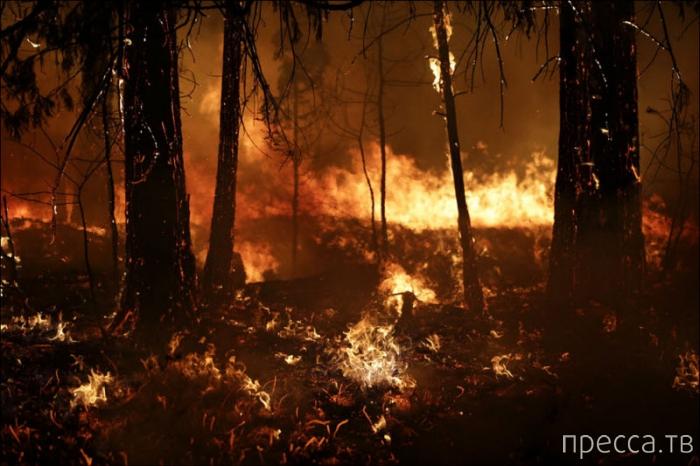 Лесные пожары в Йосемити, Калифорния (20 фото)