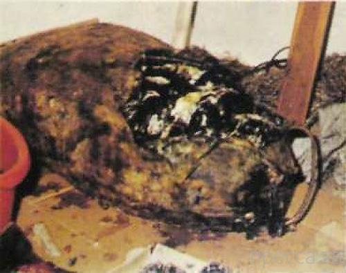 Самое отвратительное блюдо из мяса (4 фото)