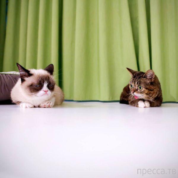 Милые и забавные животные, часть 43 (45 фото)