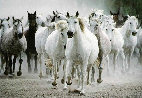 Интересные факты о лошадях...