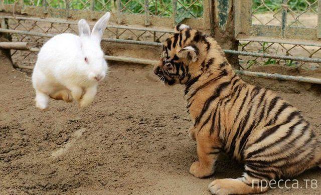 Милые и забавные животные, часть 50 (45 фото)