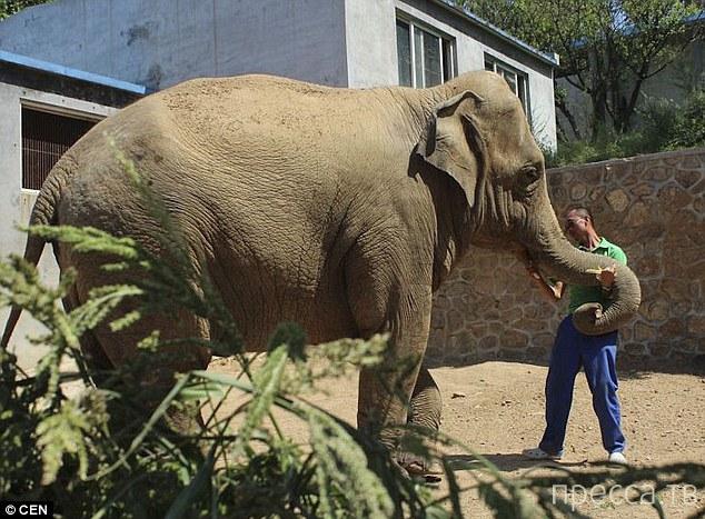 Слоненок проплакал 5 часов из-за разлуки с матерью (4 фото)