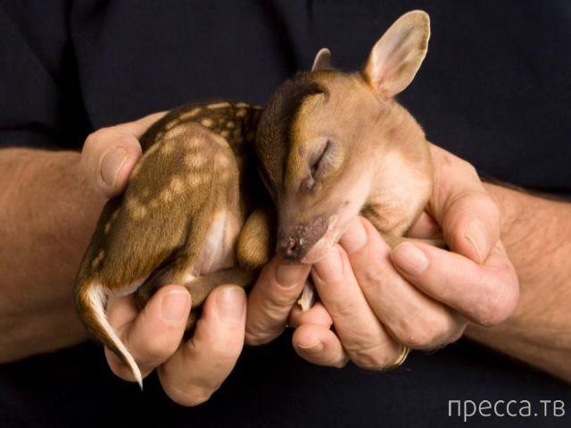 Милые и забавные животные, часть 53 (37 фото)