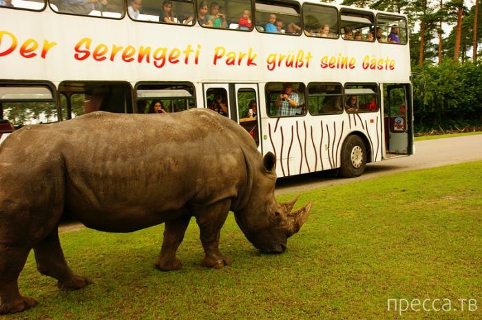 Serengeti Safari Park (8 фото)
