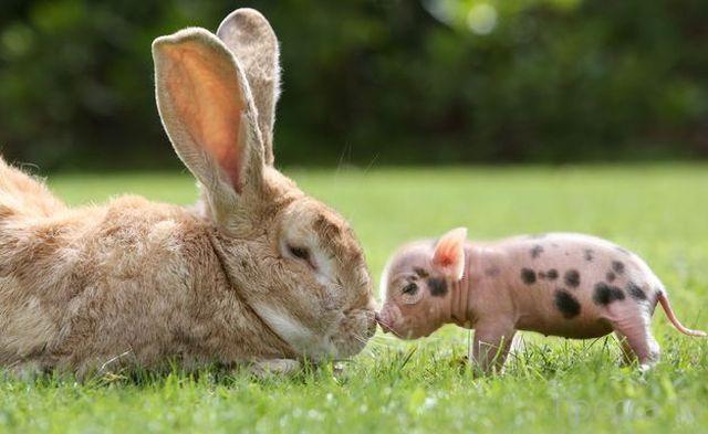 Милые и забавные животные, часть 58 (48 фото)