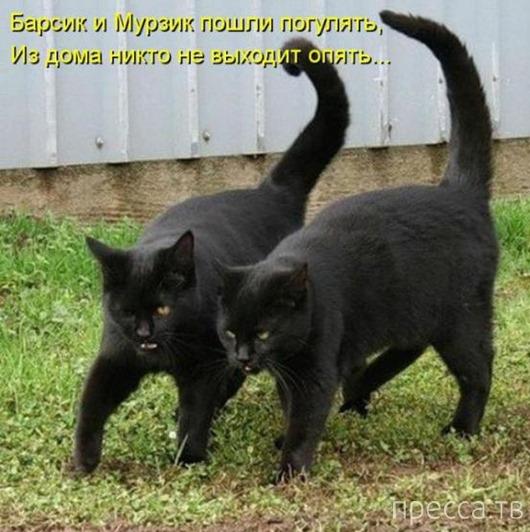 Прикольные котоматрицы, часть 2 (47 фото)