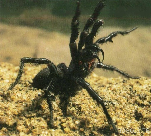 Топ 4: Интересные факты о самых ядовитых животных в мире (15 фото)