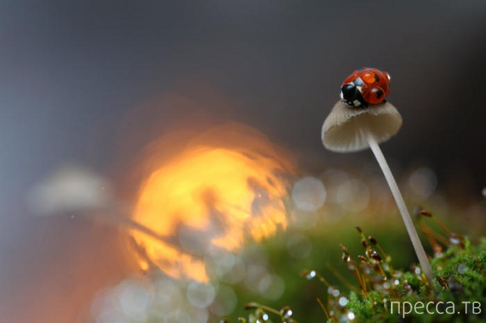 Микромир в работах  замечательного фотографа - Вадима Трунова (17 фото)
