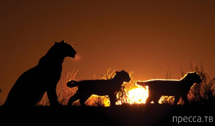 Красота дикой природы пустыни Калахари от фотографа Ханнеса Лохнера (14 фото)