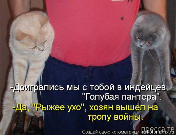 Прикольные котоматрицы, часть 5 (50 фото)