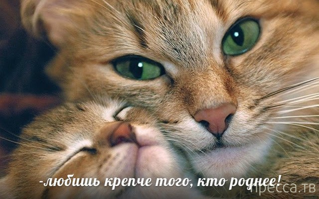 Прикольные картинки с животными, часть 2 (16 фото)