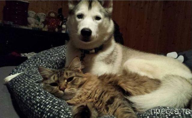 Милые и забавные животные, часть 83 (40 фото)
