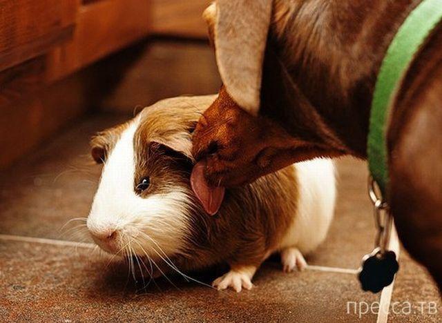 Милые и забавные животные, часть 88 (41 фото)