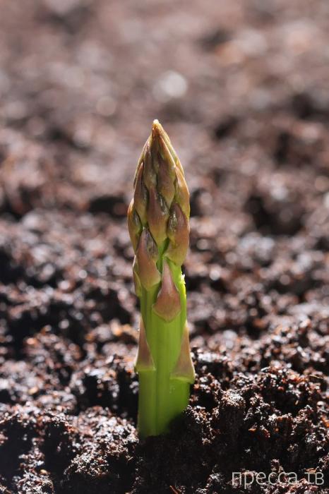 Топ 11: Продукты питания, которые растут необычным образом (14 фото)