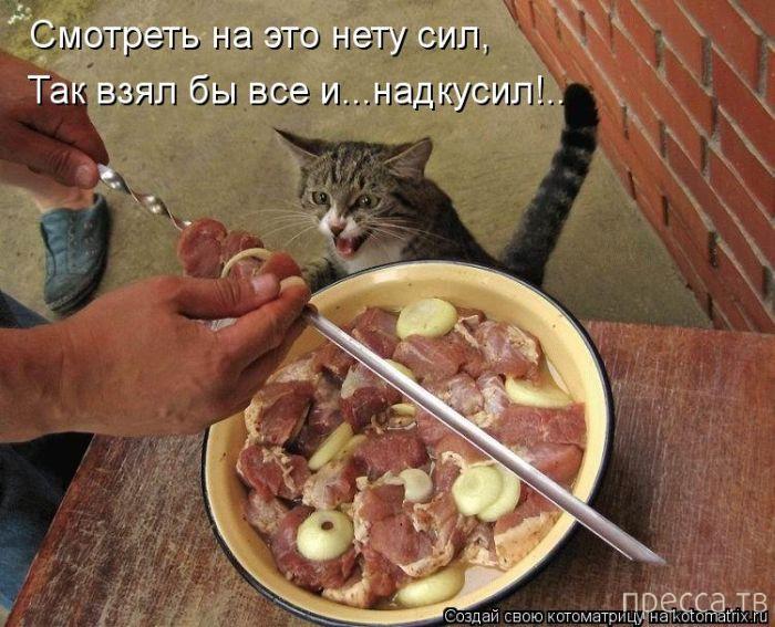 Самые смешные котоматрицы (50 фото)