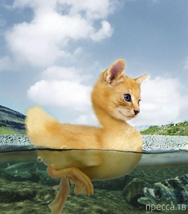 Фантастические животные от мастеров фотошопа (15 фото)