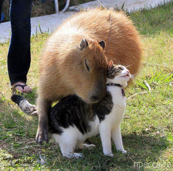 Милые и забавные животные, часть 100 (46 фото)